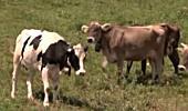 Alpwirtschaft erhält Kulturlandschaft und sichert Lebensqualität